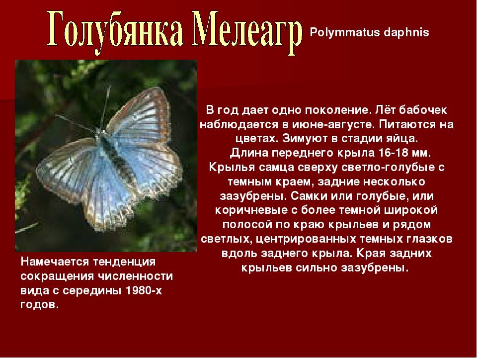 Polymmatus daphnis В год дает одно поколение. Лёт бабочек наблюдается в июне-...