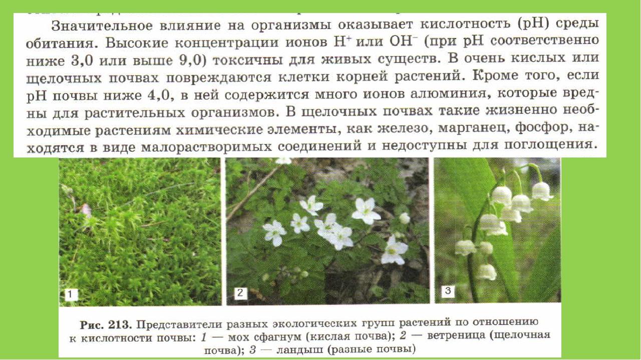 или растения для кислых почв избранное) (текст песни)