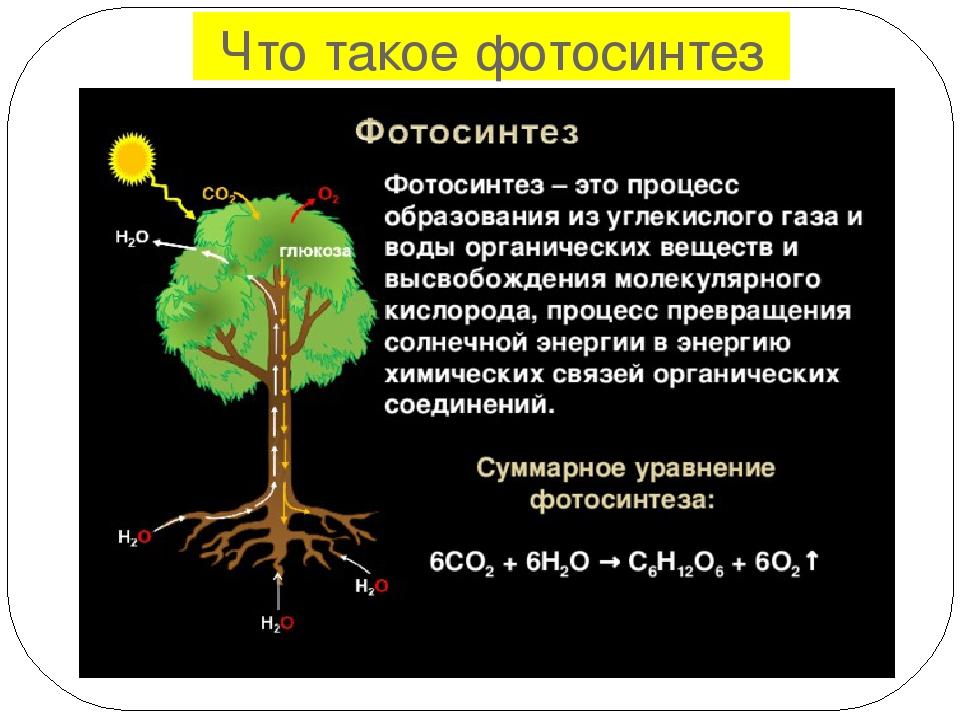 Биологическая значение темновой фазы фотосинтеза кладбище