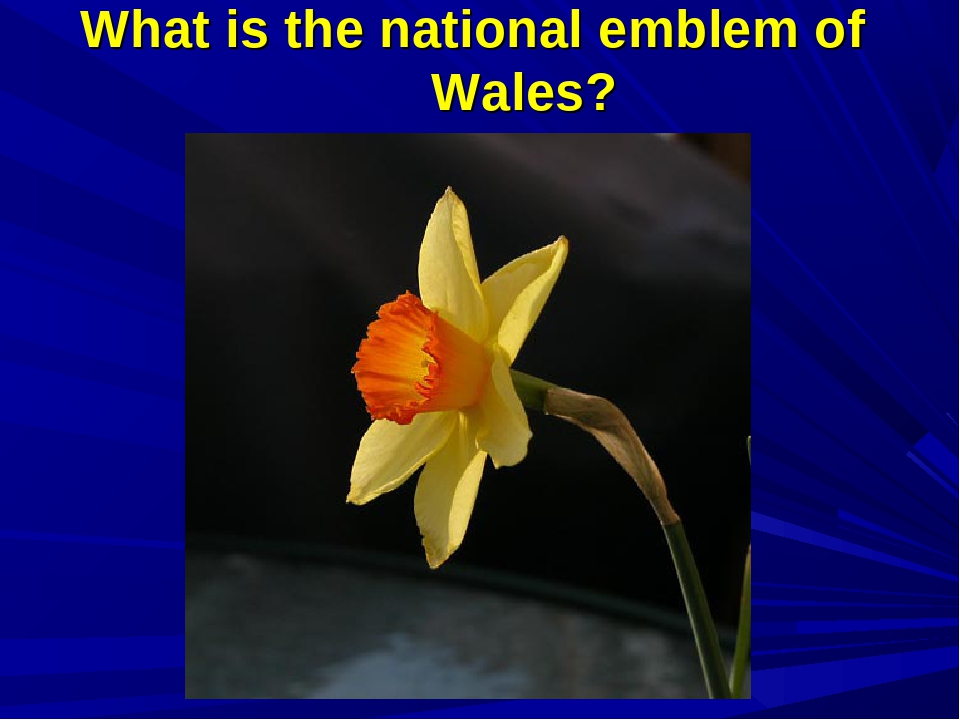What is the national emblem of Wales?