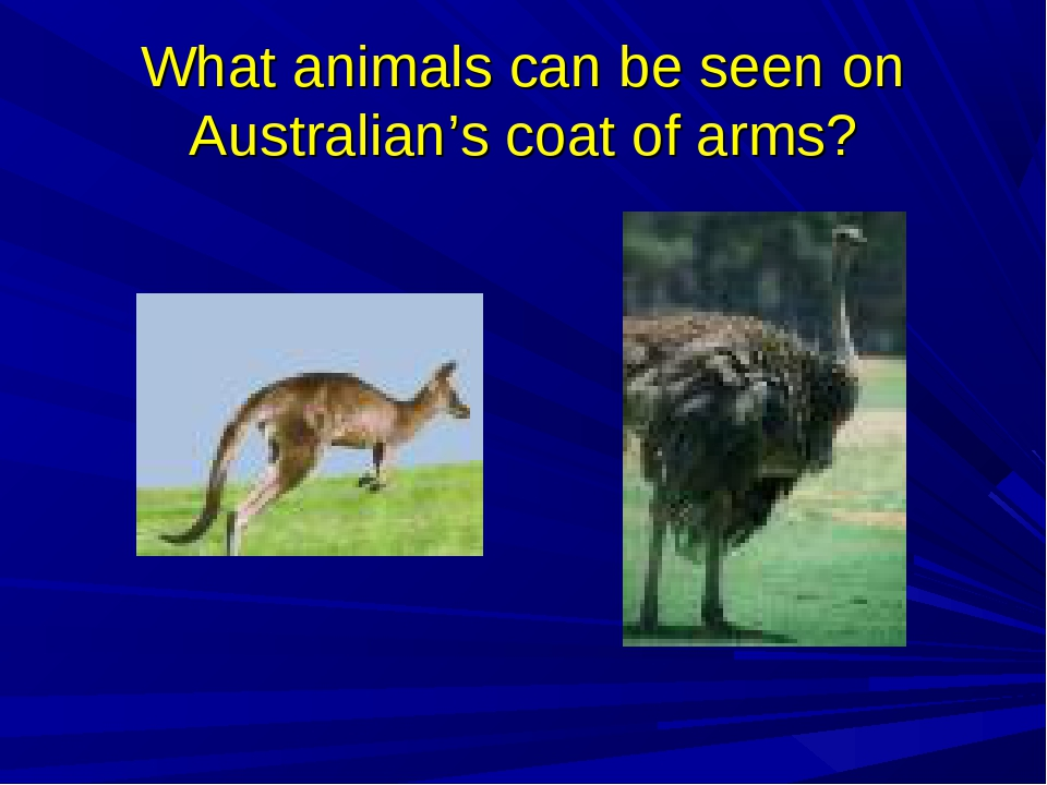 What animals can be seen on Australian's coat of arms?