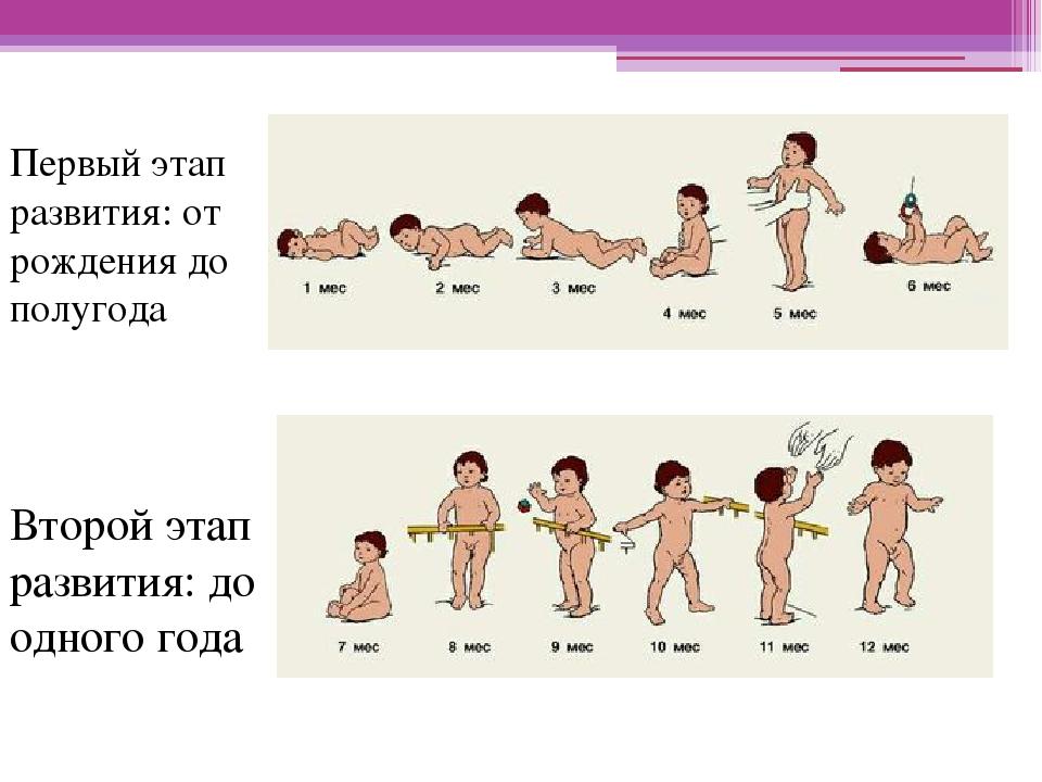 Развитие человека до рождения в картинках