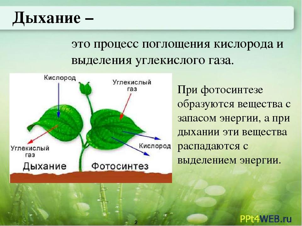 Фотосинтез и азот в растениях выбора зависимости