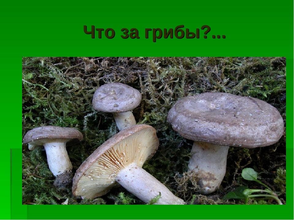 Что за грибы?...