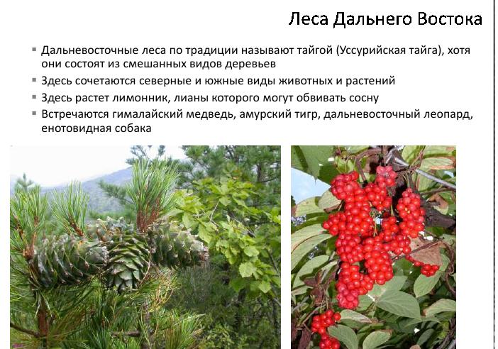 Леса умеренного пояса конспект урока география 8 класс