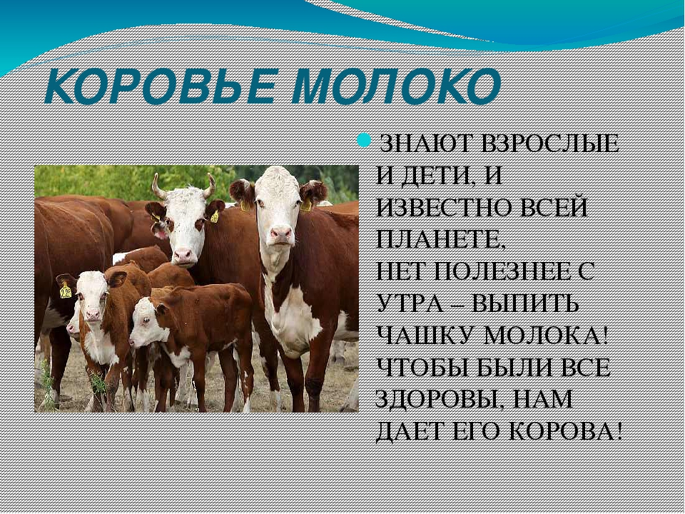 квартир Калининградской к чему снится молоко Обрезка винограда пошагово