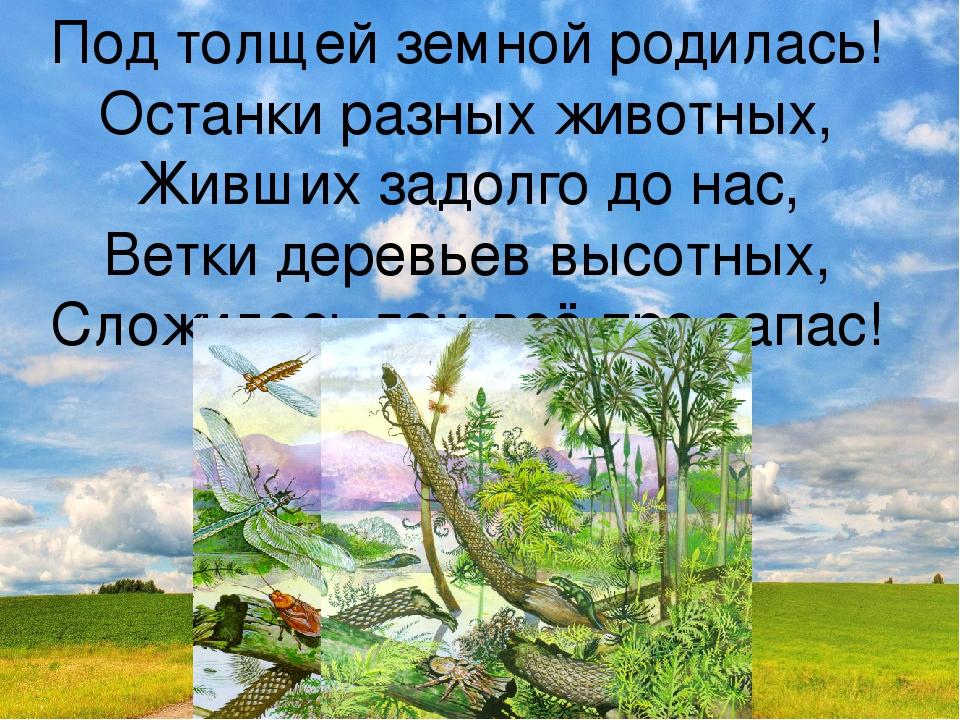 Под толщей земной родилась! Останки разных животных, Живших задолго до нас, В...