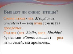 Бывают ли синие птицы? Синяя птица (лат.Myophonus caeruleus)— вид птиц семе