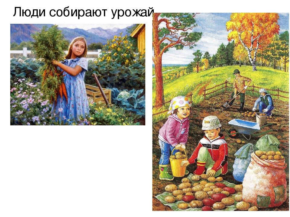 Осень сбор урожая картинки для детей