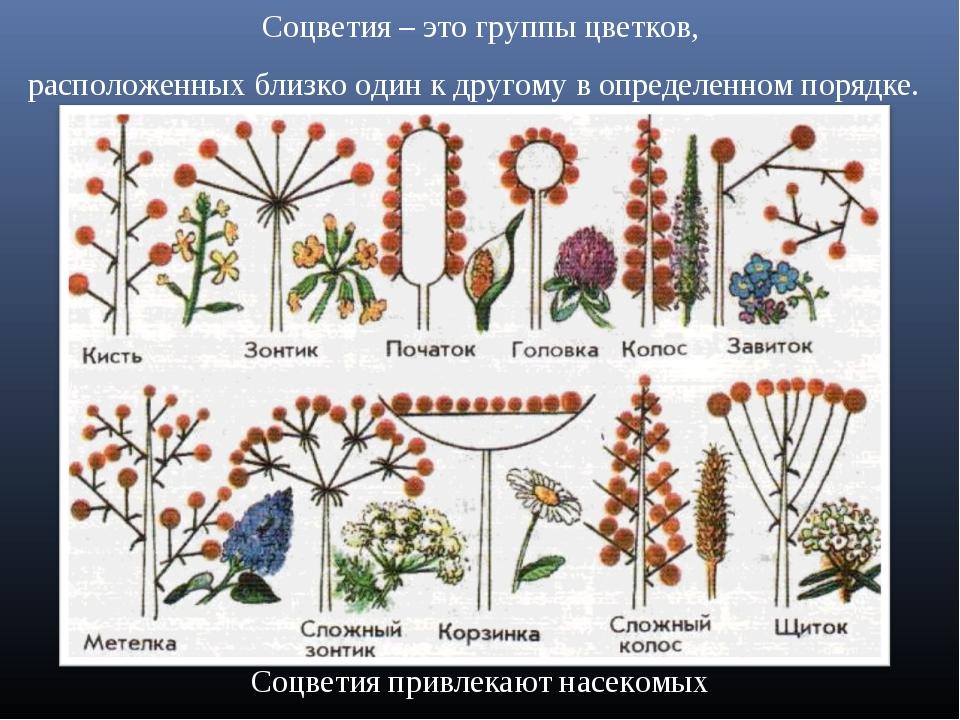 шпаргалки по цветковым растениям