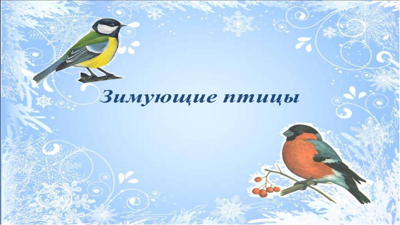 Картинки зимующих птиц с презентацией