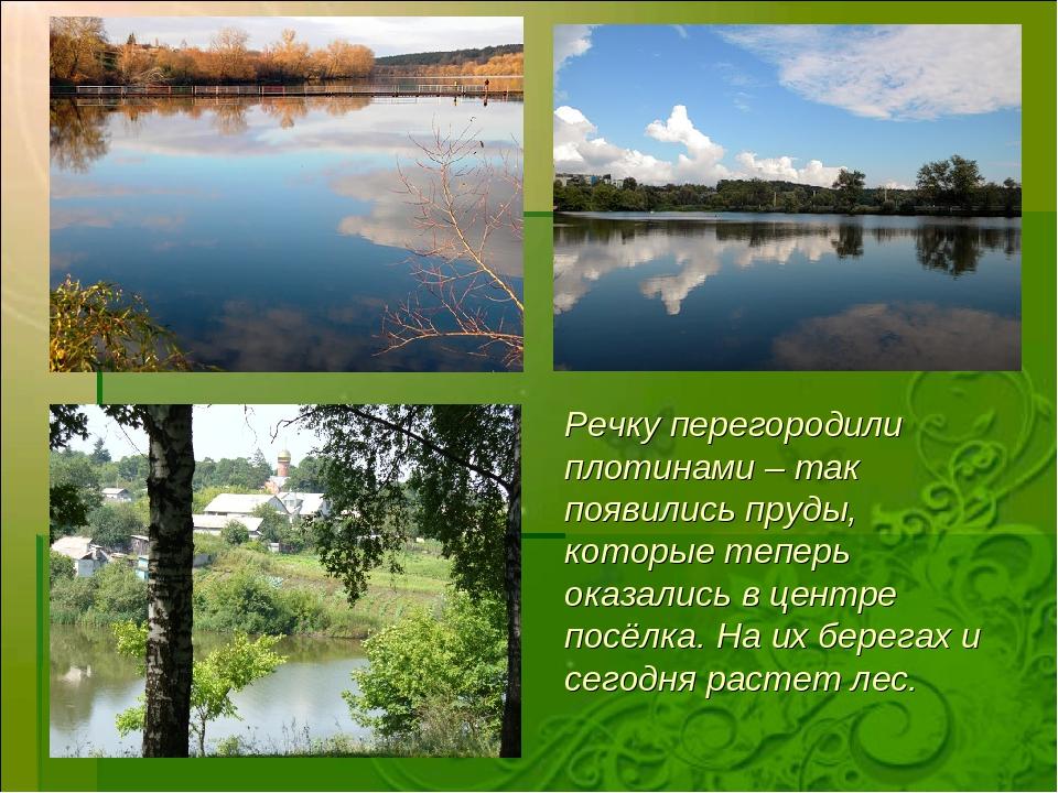 Речку перегородили плотинами – так появились пруды, которые теперь оказались...
