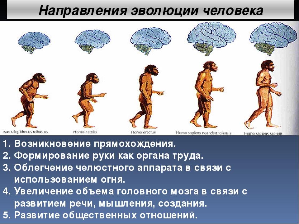 Эволюция гдз человека по