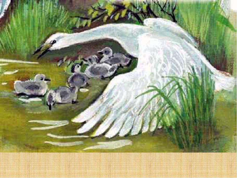 Иллюстрации к стиху лебедушка для детей