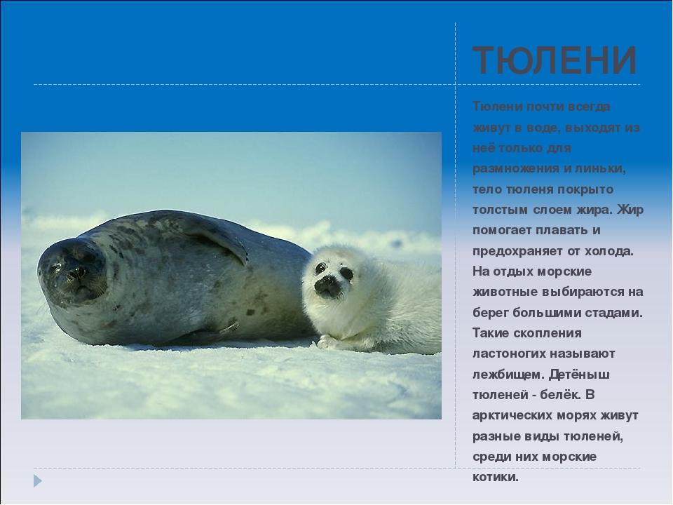 любом все о тюленях и их картинки пожалуйста найти номер