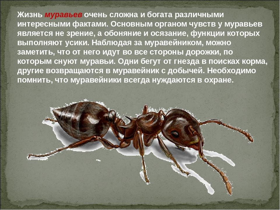 Жизнь муравьев очень сложна и богата различными интересными фактами. Основным...