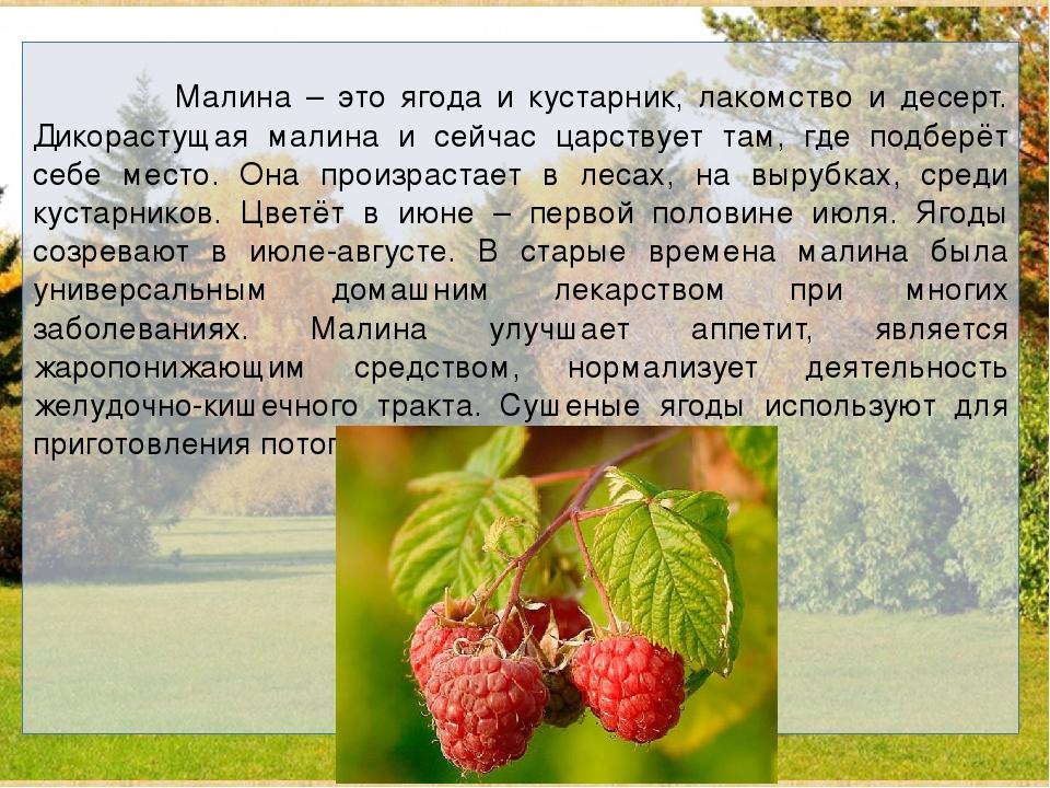 Малина – это ягода и кустарник, лакомство и десерт. Дикорастущая малина и се...