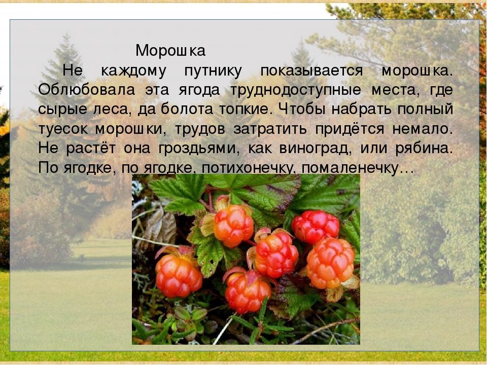 Морошка Не каждому путнику показывается морошка. Облюбовала эта ягода т...
