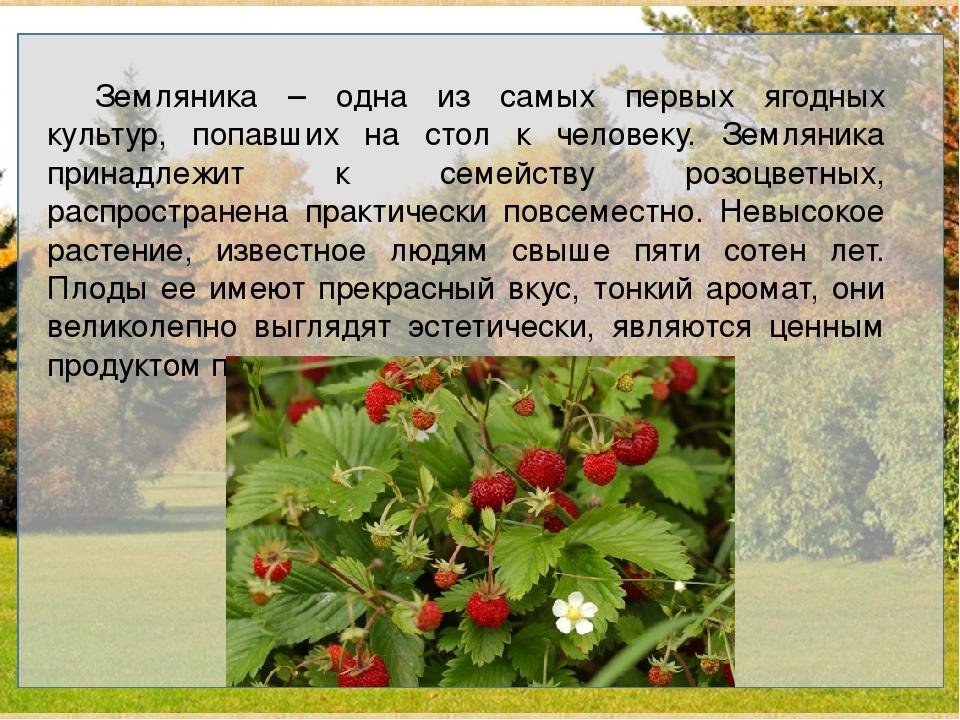 Земляника – одна из самых первых ягодных культур, попавших на стол к челове...