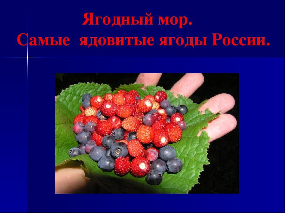 Ягодный мор. Самые ядовитые ягоды России.