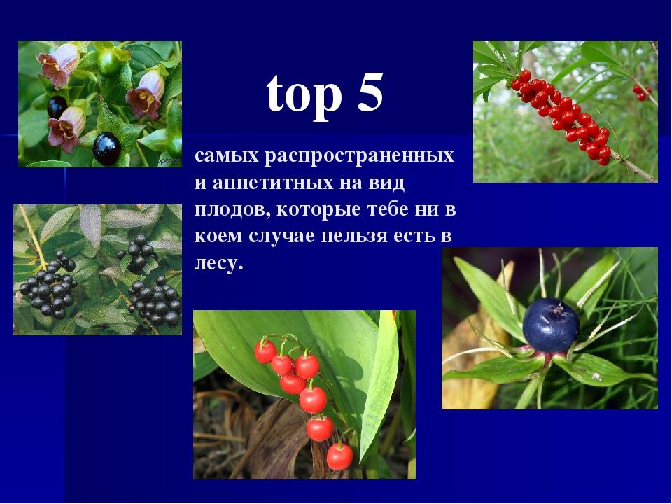 top 5 самых распространенных и аппетитных на вид плодов, которые тебе ни в ко...