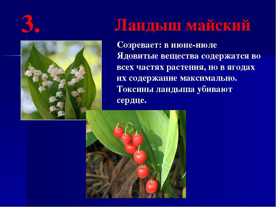 Созревает: в июне-июле Ядовитые вещества содержатся во всех частях растения,...