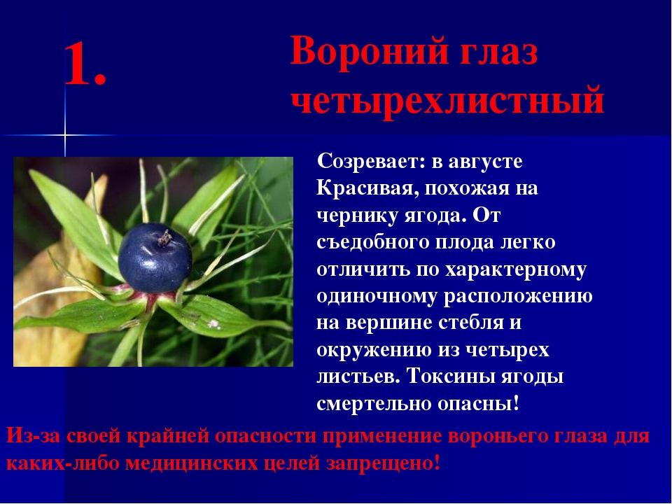 Созревает: в августе Красивая, похожая на чернику ягода. От съедобного плода...