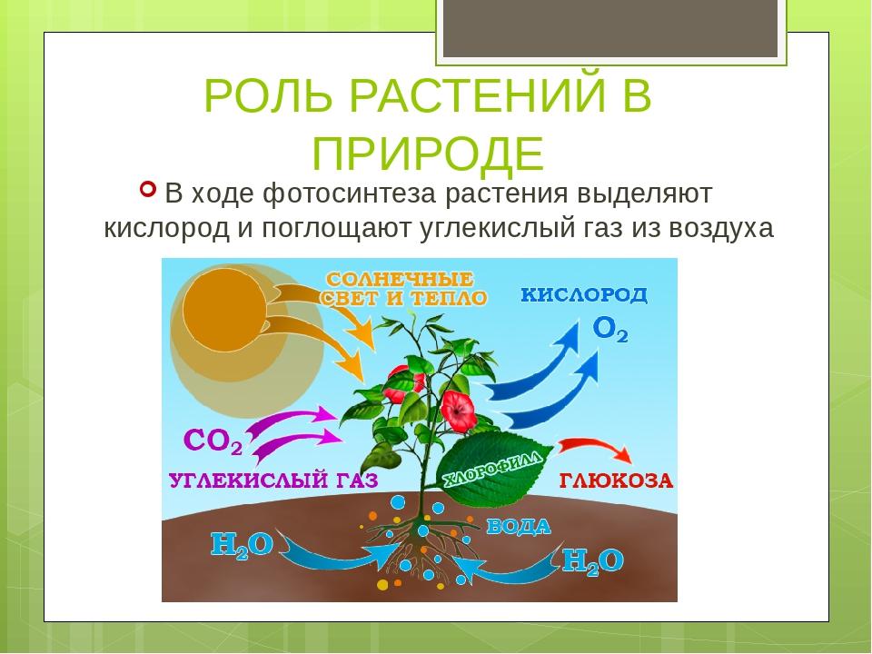 продаем земля во времена фиолетового фотосинтеза чемпионат мира