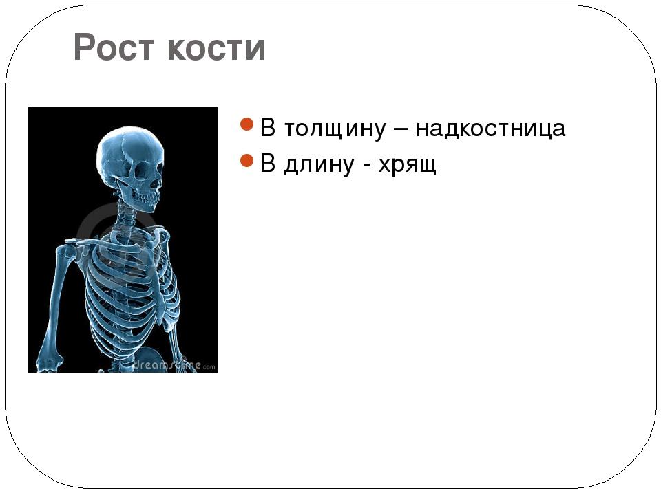 Рост кости В толщину – надкостница В длину - хрящ