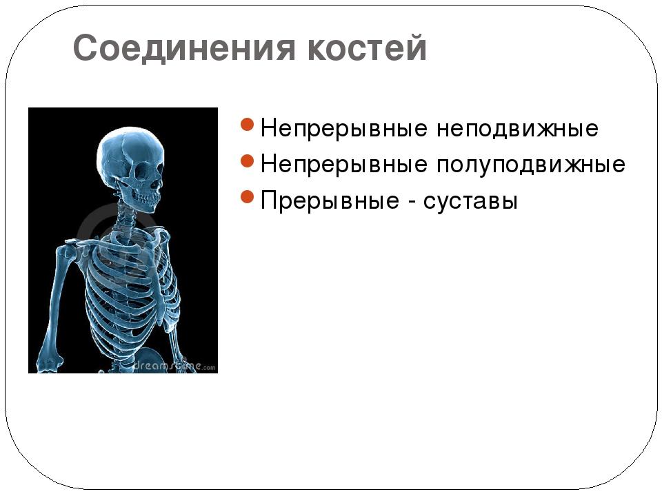 Соединения костей Непрерывные неподвижные Непрерывные полуподвижные Прерывные...
