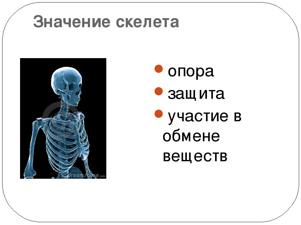 Значение скелета опора защита участие в обмене веществ