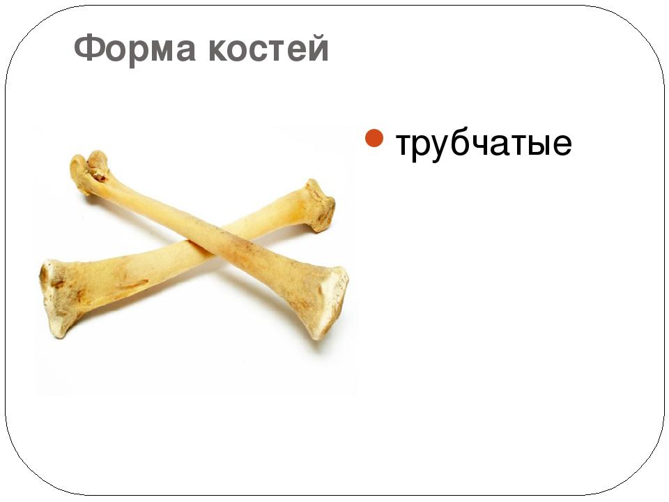 Форма костей трубчатые
