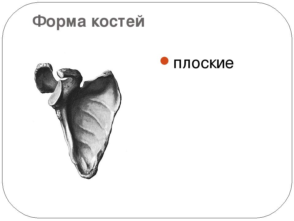Форма костей плоские