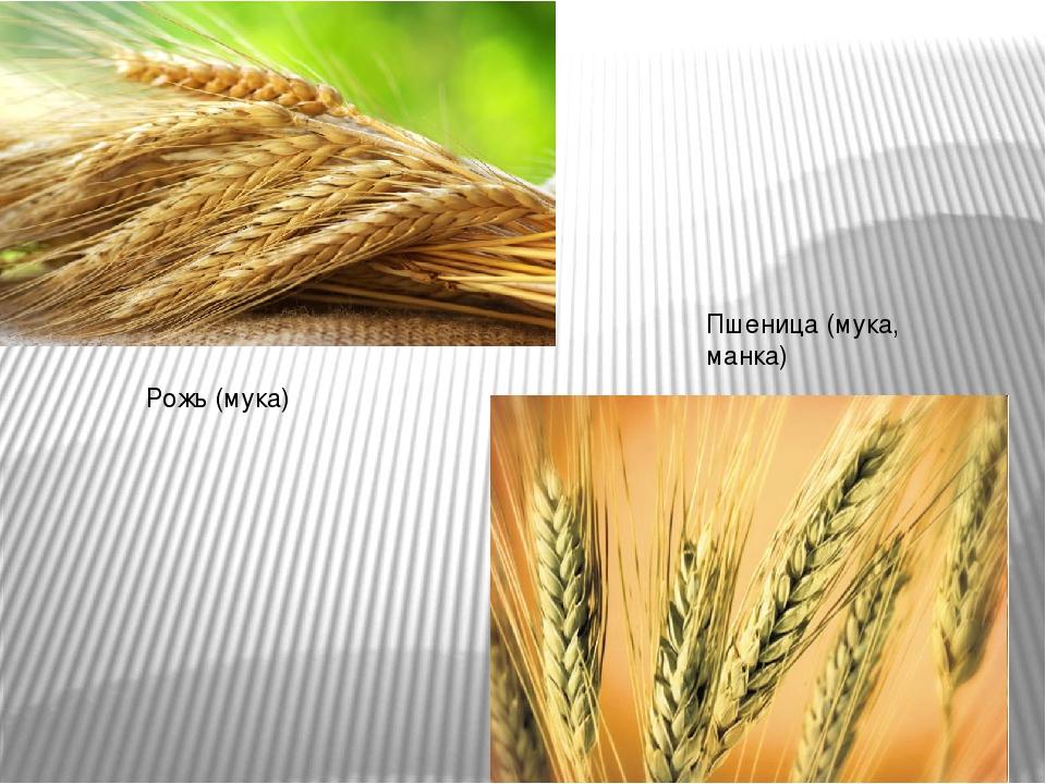 дары поля рожь пшеницастаршей группе