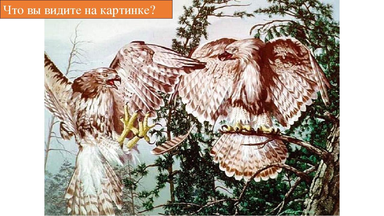 Что вы видите на картинке?