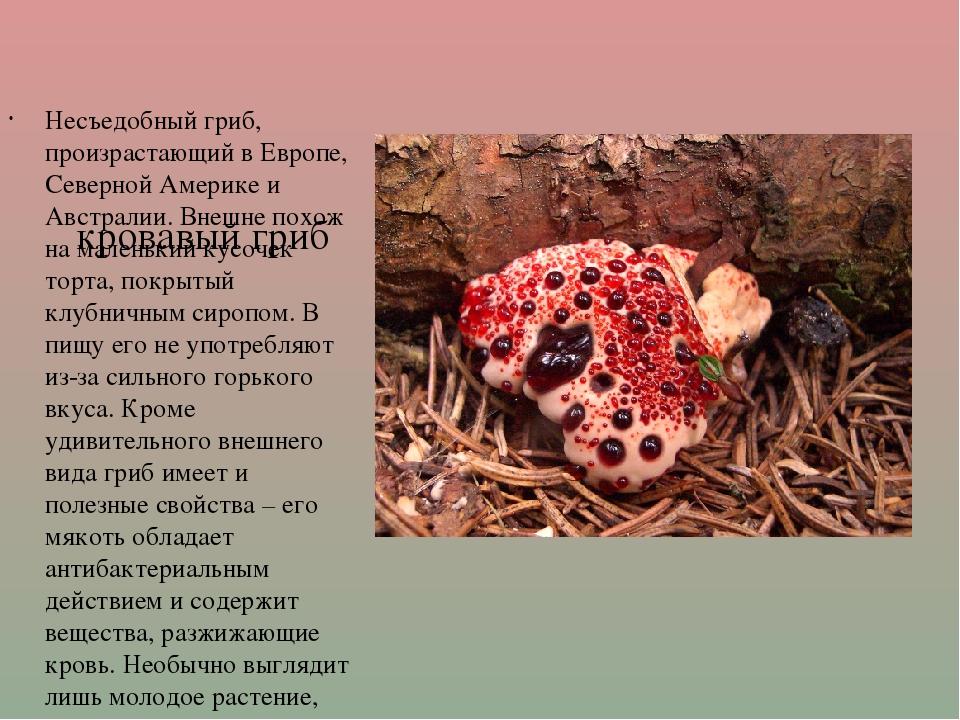 кровавый гриб Несъедобный гриб, произрастающий в Европе, Северной Америке и...