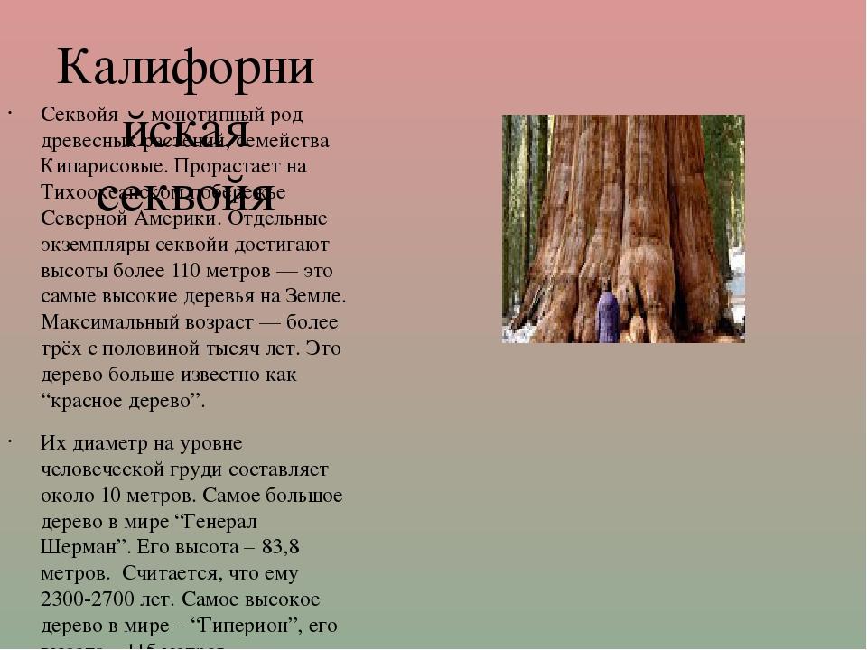 Калифорнийская секвойя Секвойя — монотипный род древесных растений, семейства...