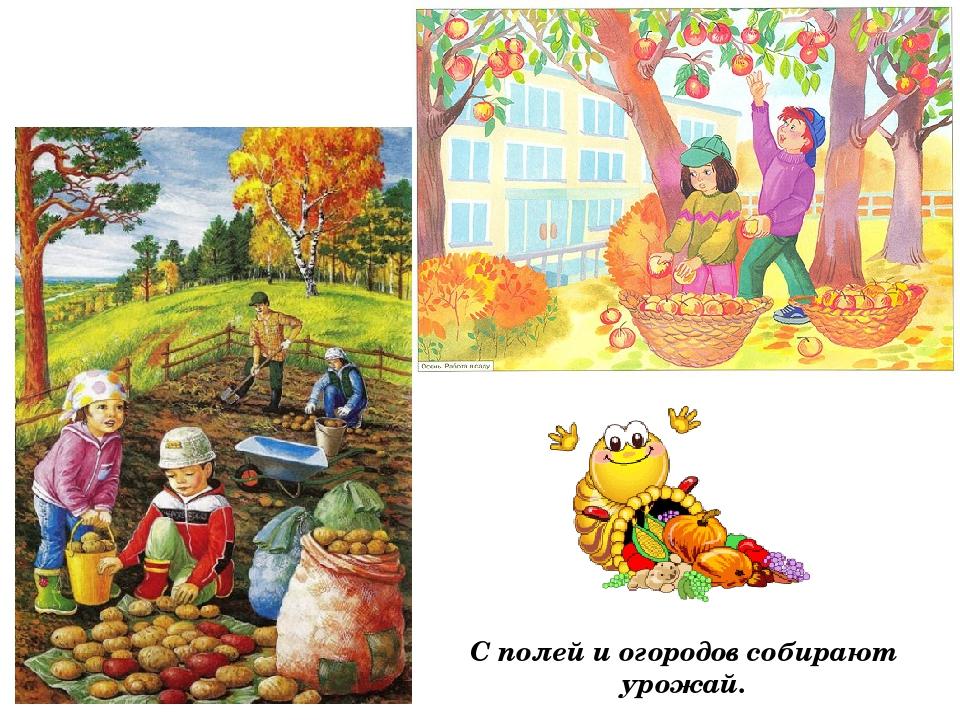 Картинка как собирают урожай осенью