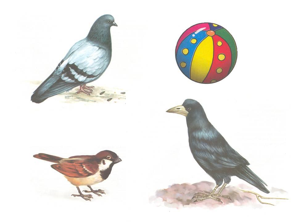 птицы дидактические картинки область богата