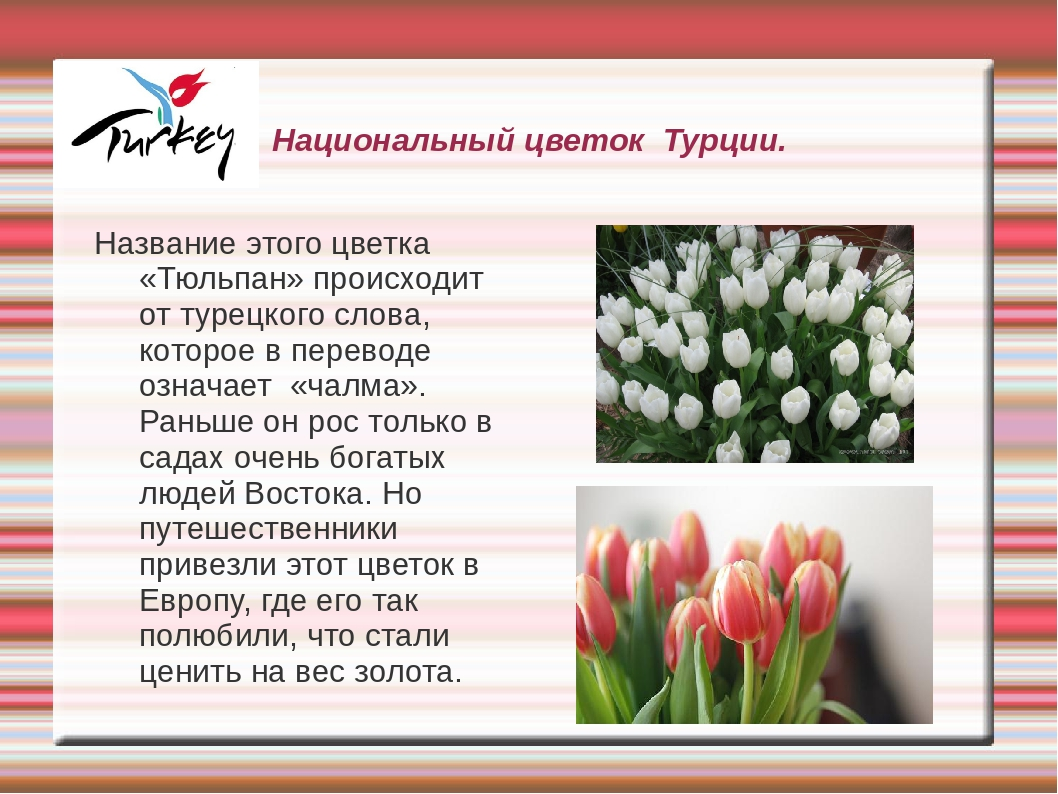 Цветы из турции