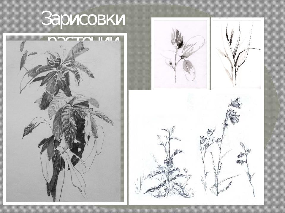 Зарисовки растений