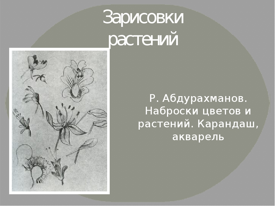 Зарисовки растений Р. Абдурахманов. Наброски цветов и растений. Карандаш, акв...
