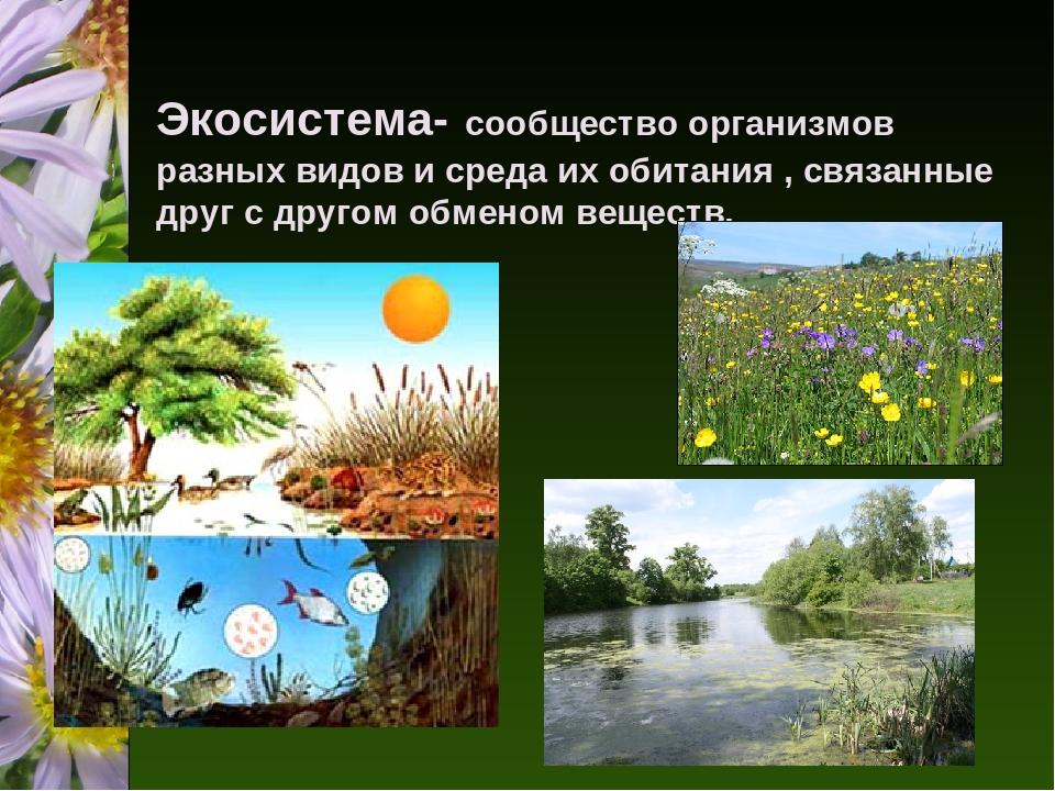 экосистема это картинки причина
