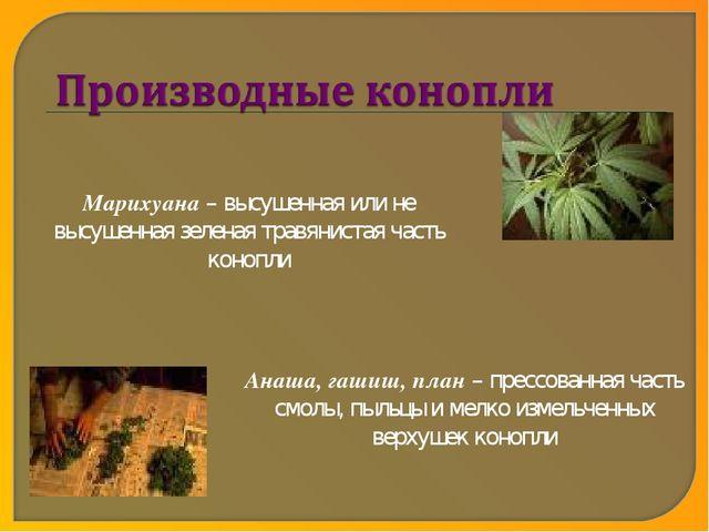 Марихуана – высушенная или не высушенная зеленая травянистая часть конопли Ан...