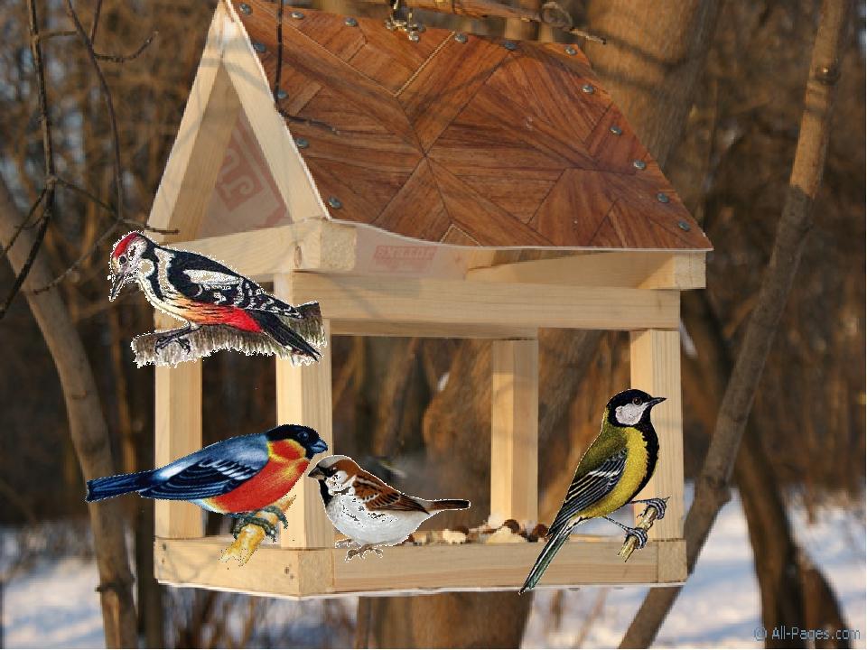Картинка кормушка с птицами зима