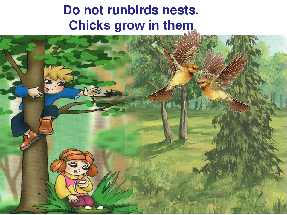 Do not runbirds nests. Chicks grow in them
