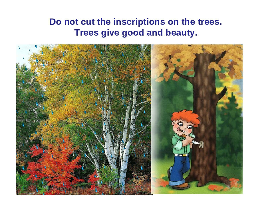 Do not cut the inscriptions on the trees. Trees give good and beauty.