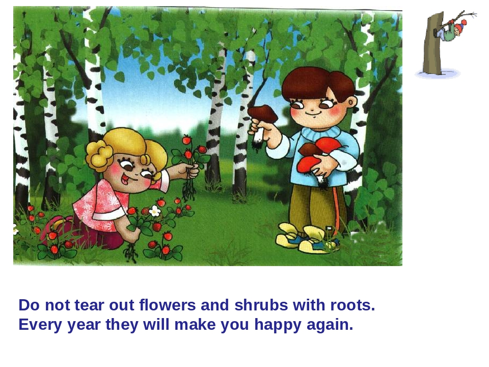 Do not tear out flowers and shrubs with roots. Every year they will make you...