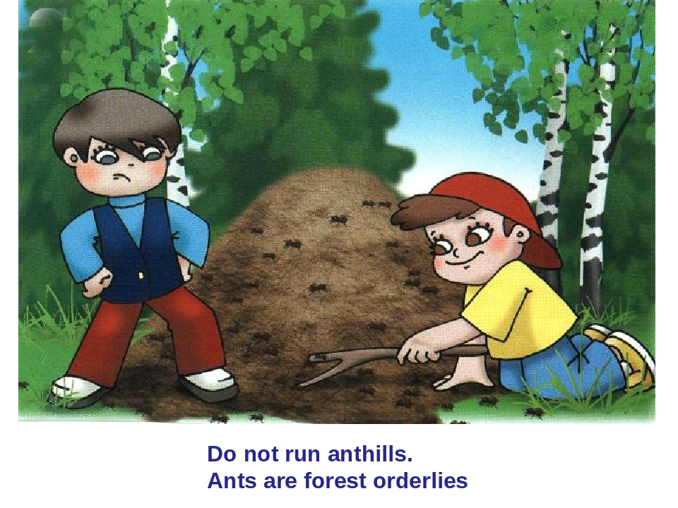 Do not run anthills. Ants are forest orderlies