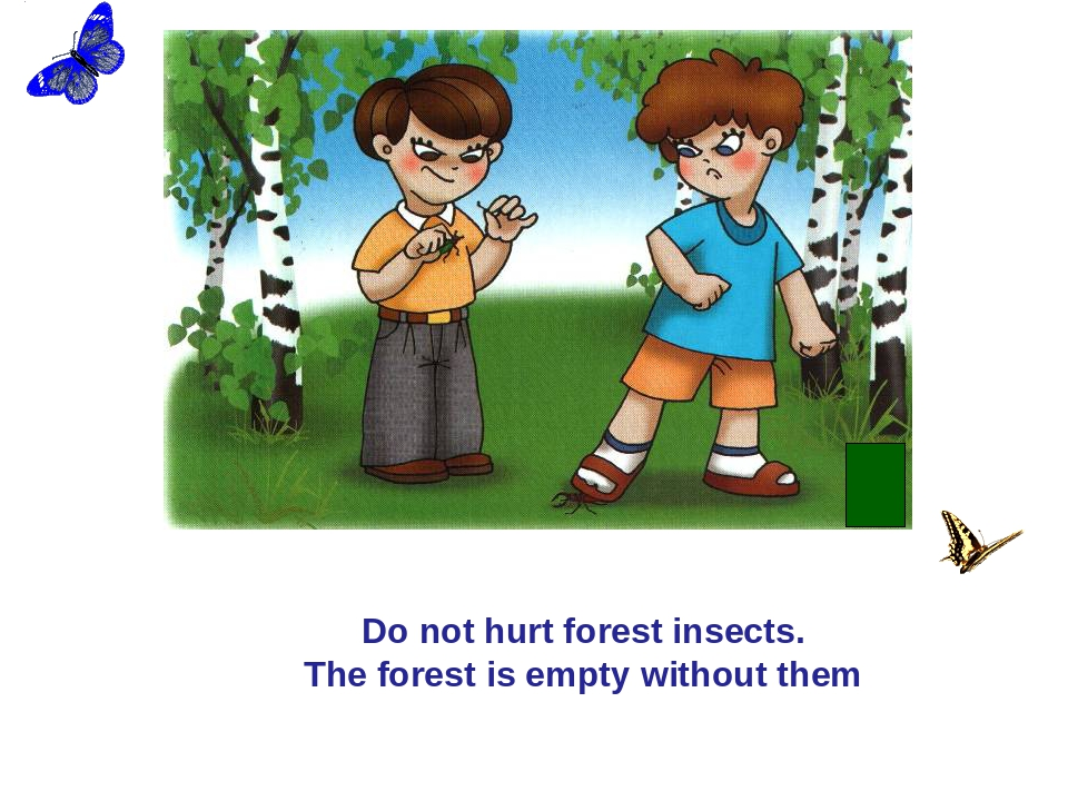 Do not hurt forest insects. The forest is empty without them